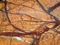 大理石和花岗岩的仿古面加工制作工艺