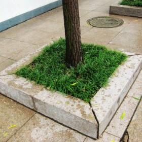 黄锈石树围石